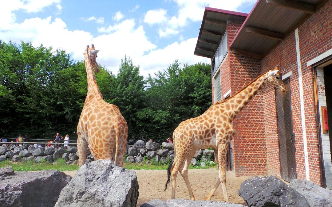 Zoo de Maubeuge