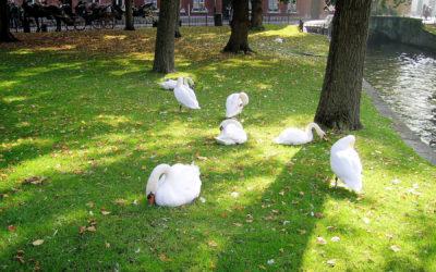 Escapade à Bruges (4ème partie)